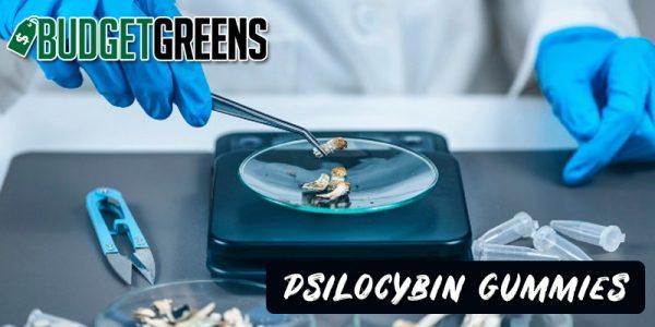 psilocybin gummies