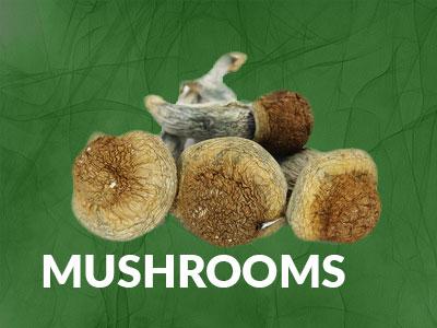 mushrooms cat