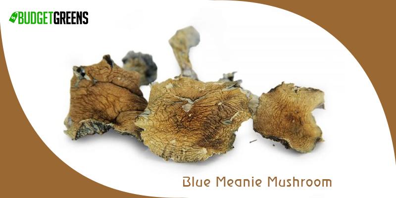 Blue Meanie Mushroom