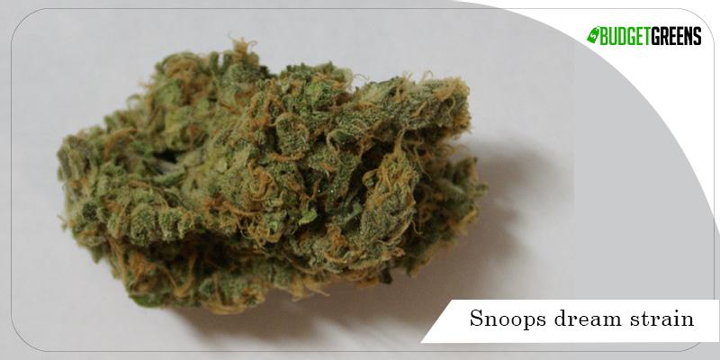 snoops dream strain